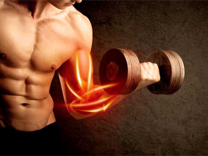 facts about building muscle